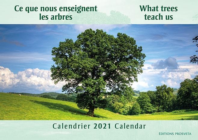 Ce que nous enseignent les arbres